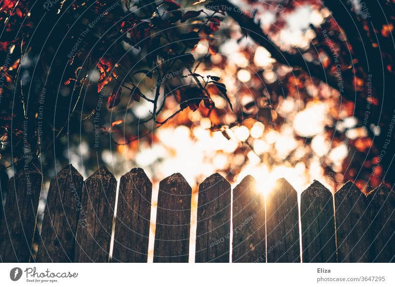 A backlit fence with trees and the sun Fence Back-light huts Sun Illuminate Nature Sunlight leaves foliage warm Light Bright Garden Autumn green Sunbeam