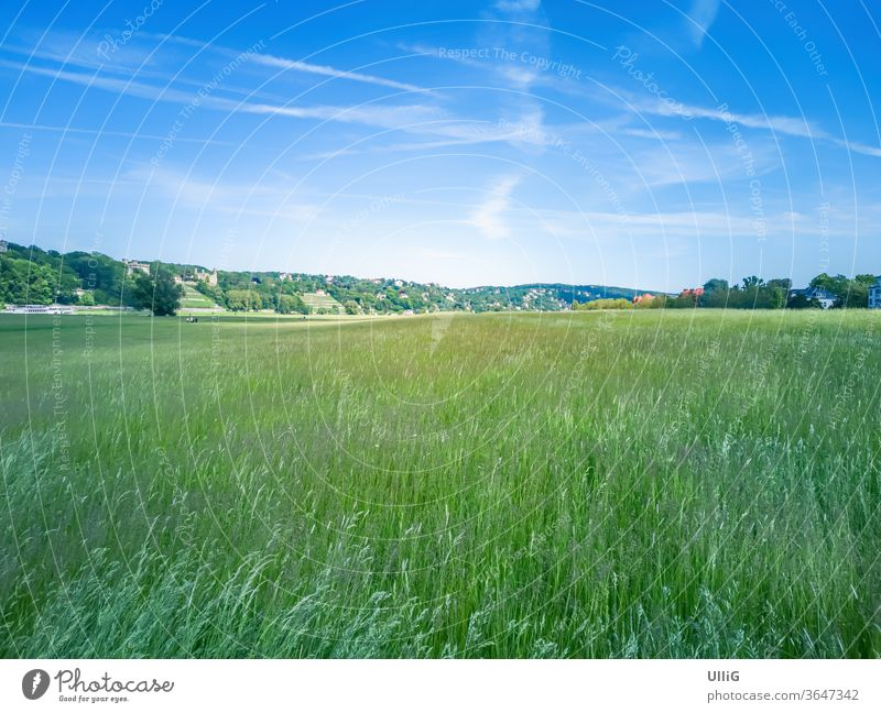Elbe meadows in Dresden, Saxony, Germany - Urban scenery with Elbe riverside meadows in Johannstadt, Dresden, Saxony, Germany. Aue Destination blistering wit