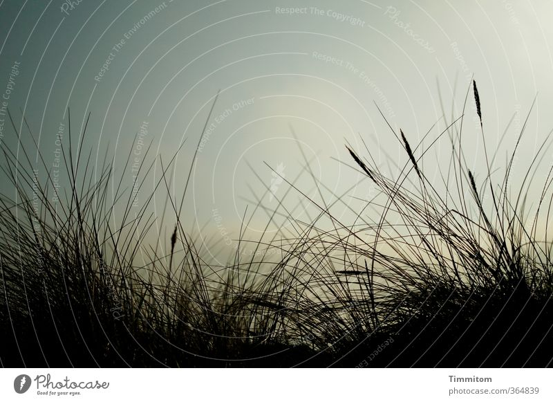 Sky Nature Vacation & Travel Blue Beautiful Plant Black Environment Emotions Natural Esthetic Beautiful weather Beach dune North Sea Blade of grass Denmark