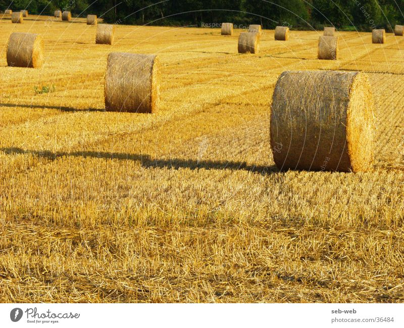Field Straw Bale of straw