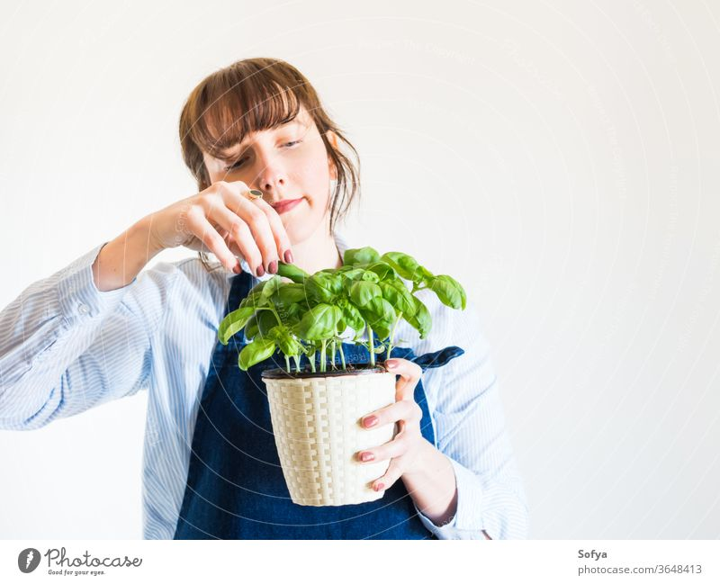 Young woman growing fresh basil at home gardening concept green pot plant herb holding hand hobby aromatic background food person girl summer nature leaf spring