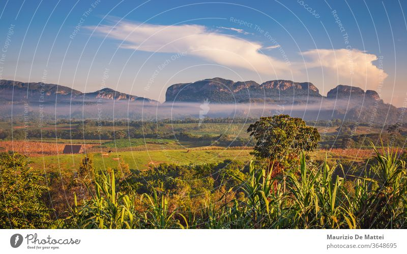 Fields, farms and mogotes in Vinales Valley, Cuba agriculture caribbean cuba cuban del destination famous field green landscape mountain nature palm panoramic