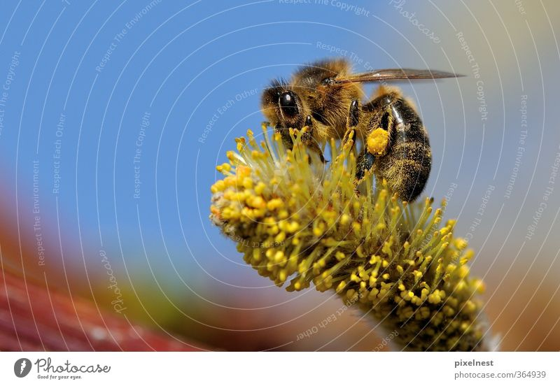 Nature Plant Animal Environment Warmth Spring Blossom Natural Work and employment Wild animal Beautiful weather Blossoming Insect Bee Fragrance