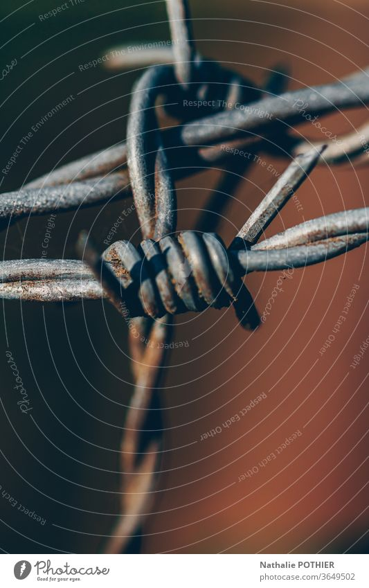 Barbed wire Rust rusty Fence Metal Barbed wire fence Protection Dangerous Exterior shot Wire Captured hurting immigration penitentiary security punishment