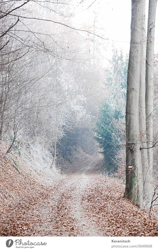 An atmospheric winter forest, covered with hoarfrost. Winter chill Frost freeze Frozen Hoar frost Forest huts twigs off Snow Mysterious