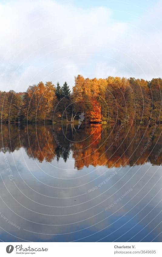Symmetry | trees with colourful autumn leaves are reflected in the lake Autumn Autumnal Autumnal trees Landscape deciduous trees Nature Reflection in the water