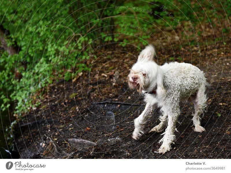 Ghost dog | wet dog shakes Dog Animal Pet 1 animal Shake Wet Wet dog spectral ghostly Motion blur white dog flying hair Wild wild dance Exterior shot