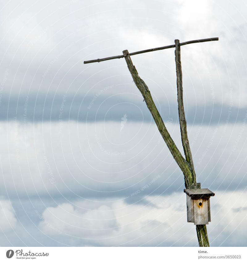 landing site Bird Box Nesting box Sky Perch Clouds Tall wood aviary triangle forks pole Fastening Landing Strip Nature bird pole