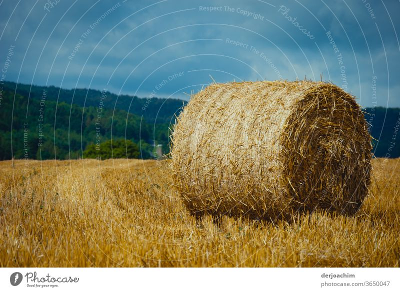 Wheat bales rolled up in a harvested field, in a beautiful Franconian landscape blue sky green forest. Wheatfield Cornfield Colour photo Nature Grain Field