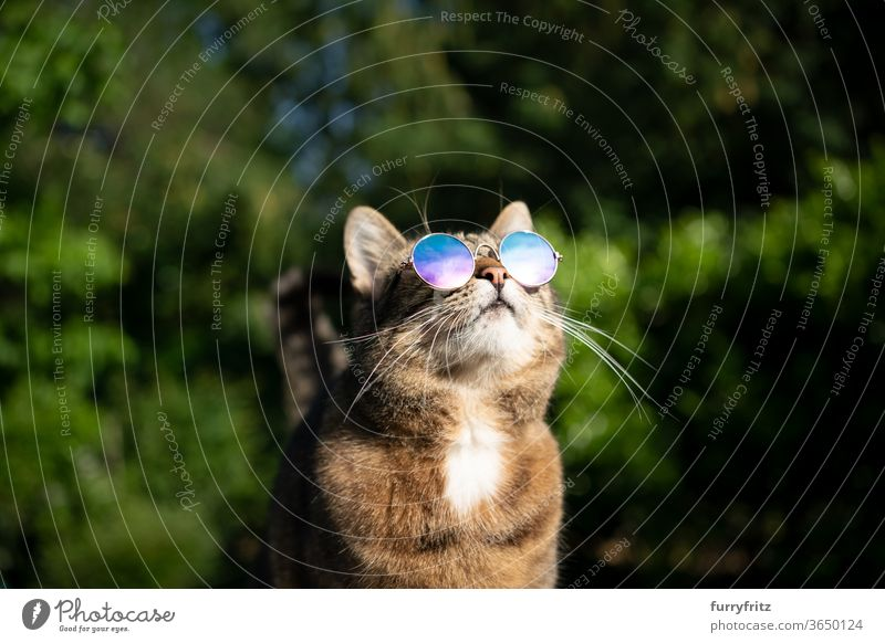 Cat with sunglasses outside looks at the sky pets mixed breed cat shorthaired cat One animal tabby sunny Sunlight Summer Nature Front or backyard Garden green