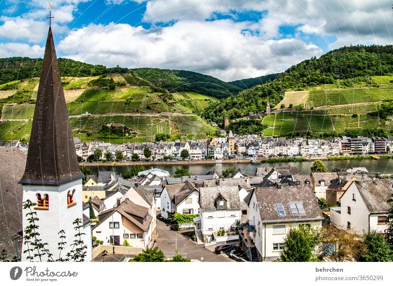 cell on the moselle Moselle dough Town Hunsrück Moselle valley Wine growing Sunlight tranquillity vine Idyll River bank Rhineland-Palatinate