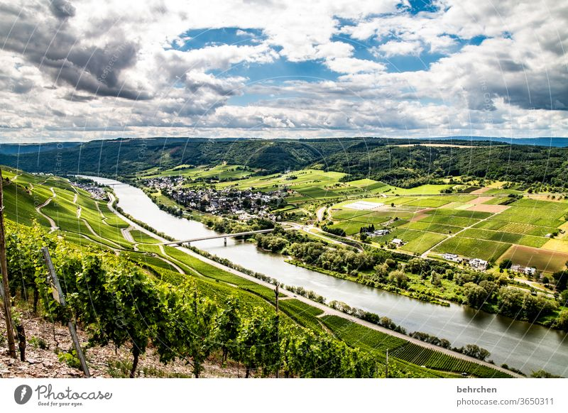 enchanting mosel wine country...for truelight Moselle dough Town Hunsrück Moselle valley Wine growing Rhineland-Palatinate River Idyll tranquillity Sunlight