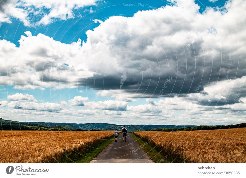 Treading new paths Symmetry Harvest endless wide Ecological Agricultural crop Growth Wheatfield Landscape Agriculture Grain Barley Rye Hiking Father Son Sky