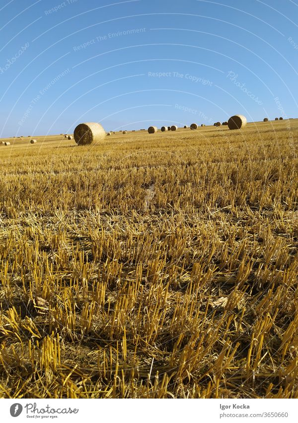 Hay Bales In Field Against Blue Sky Hay bale Sunlight scenic Agriculture Farm Harvest Rural Summer