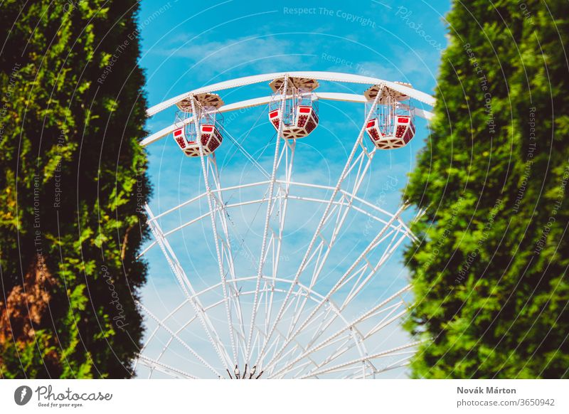 A ferris wheel with red cabins beetween two bushes outdoor light fun nobody colorful swing sky park attraction carnival small round entertainment cage beautiful