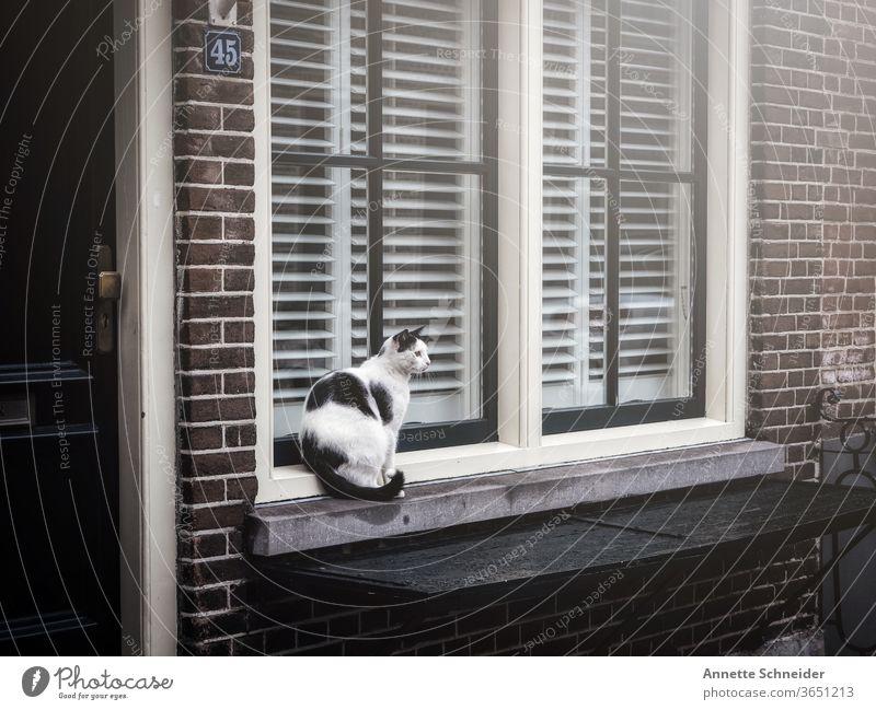 Cat black white sitting on windowsill Window Animal Black Deserted Pet Animal portrait Exterior shot Street cat Free-living Prowl Observe