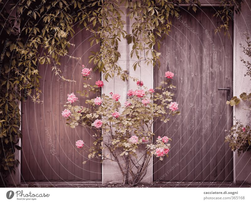City Green Plant Loneliness Environment Spring Wood Garden Dream Exceptional Brown Pink Facade Door Power Beautiful weather