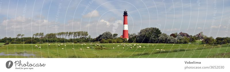 Lighthouse on Pellworm Island North Sea Schleswig-Holstein Sheep sheep panorama Architecture Landscape meadows huts Sky North Sea Islands