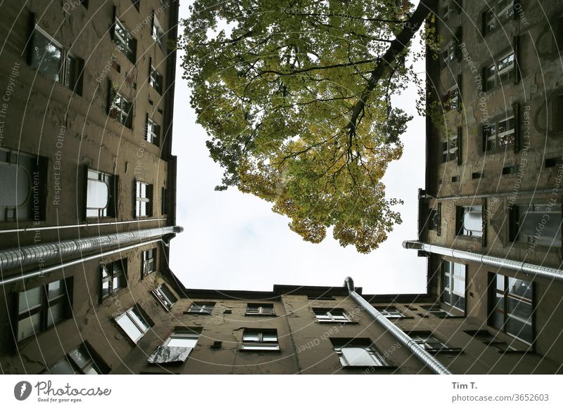 Holidays in Berlin Prenzlauer Berg Backyard Courtyard tree Old building Deserted House (Residential Structure) Town Downtown Day Capital city Old town