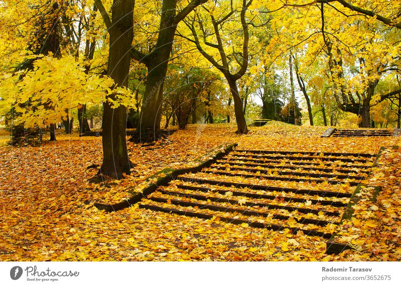 autumn cityscape yellow nature lane park tree landscape season road sunlight foliage fall outdoors october orange forest green golden day bright scene beautiful