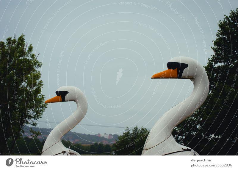 Two wooden swans are waiting for tourists. Animal Exterior shot birds Deserted Colour photo Feather White Water Nature Beak already Elegant Esthetic Pride Neck