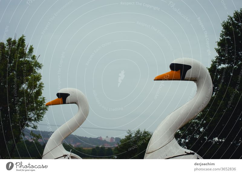 Two wooden swans are waiting for tourists. With view to the left. Animal Exterior shot Bird Deserted Colour photo Feather White Water Nature Beak pretty Elegant