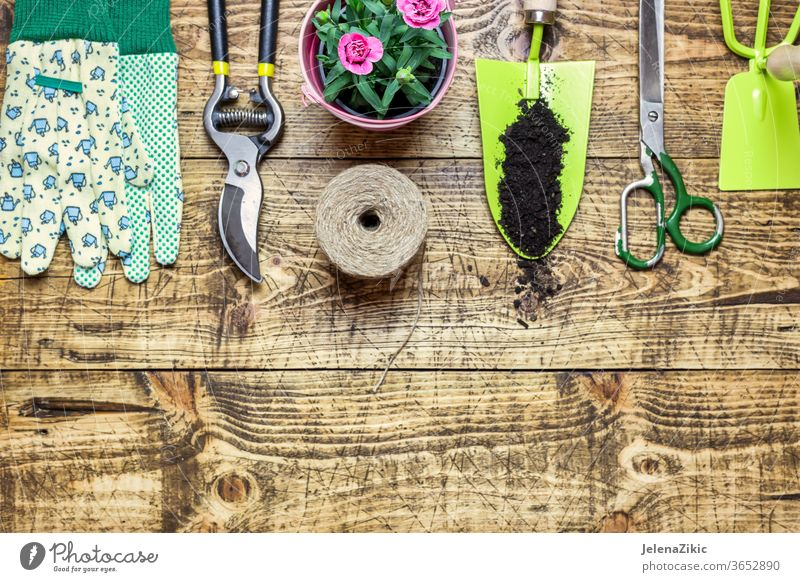 Composition with flowers and gardening tools soil green summer spring growth nature watering flowerpot house outdoors plant floral botanical housework wooden