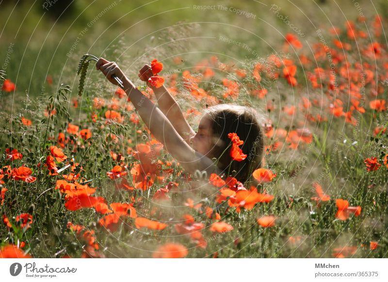 Child Nature Green Summer Sun Red Relaxation Girl Meadow Life Feminine Grass Playing Garden Dream Park