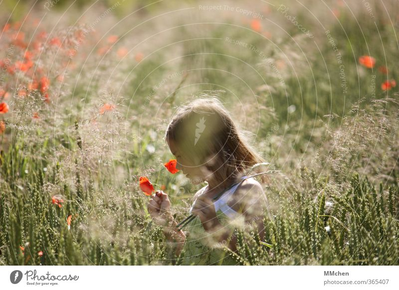 time if away Contentment Calm Leisure and hobbies Girl 1 Human being 3 - 8 years Child Infancy Summer Beautiful weather Field Observe Blossoming Playing Hiking