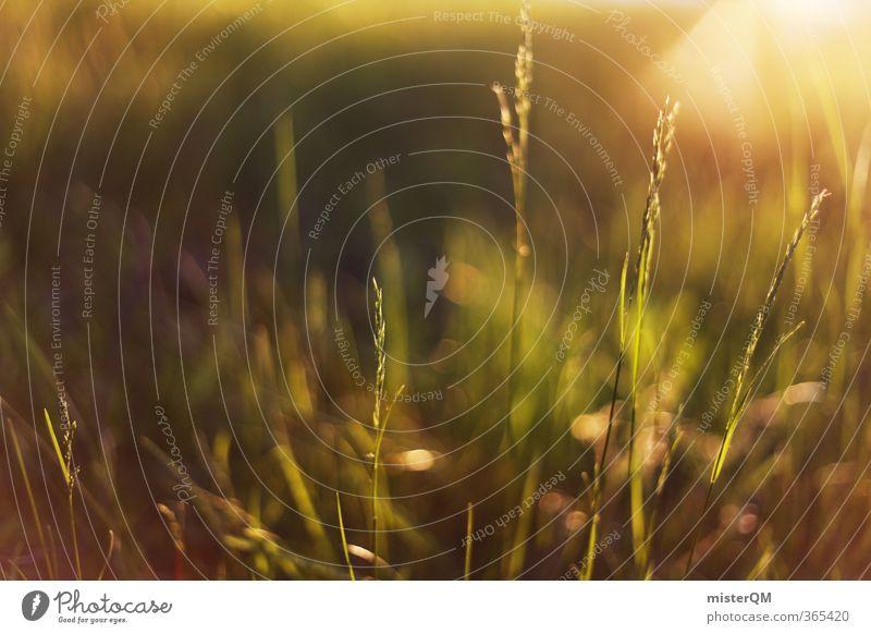 Morning Grass. Art Esthetic Contentment Grassland Grass green Whispering grass Meadow Green Nature Natural Sun Sunrise Calm Idyll Summery Flower meadow Warmth