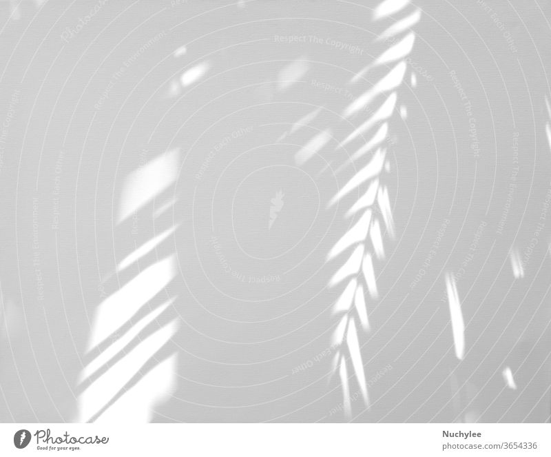 Realistic and organic tropical leaves natural shadow overlay effect on white texture background, for overlay on product presentation, backdrop and mockup