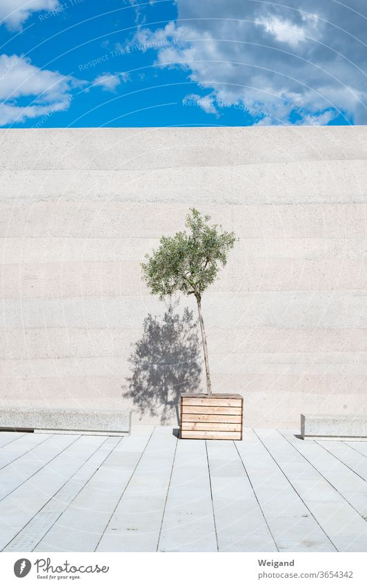 Olive tree in front of wall Wall (barrier) Sky Modern Puristic Esthetic Plant Architecture Concrete Concrete wall green Summer Deserted Facade
