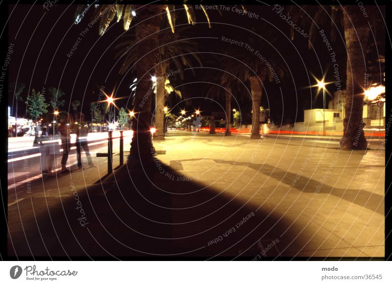 promenade Sardinia Palm tree Long exposure Light Vacation & Travel Italy Night Town Summer Europe Shadow Movement