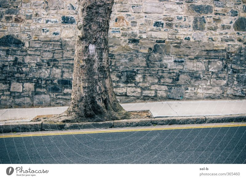 cnoc Nature Tree Wall (barrier) Wall (building) Transport Street Old Clean Gray Tree trunk Road marking Yellow Line Hill Slope Brick Brick wall Town