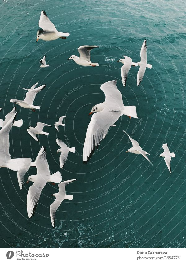 Seagulls above the sea birds seagull Flying water ocean Gull birds Freedom nature Exterior shot colour photo Wild animal together friends flight run troop flock