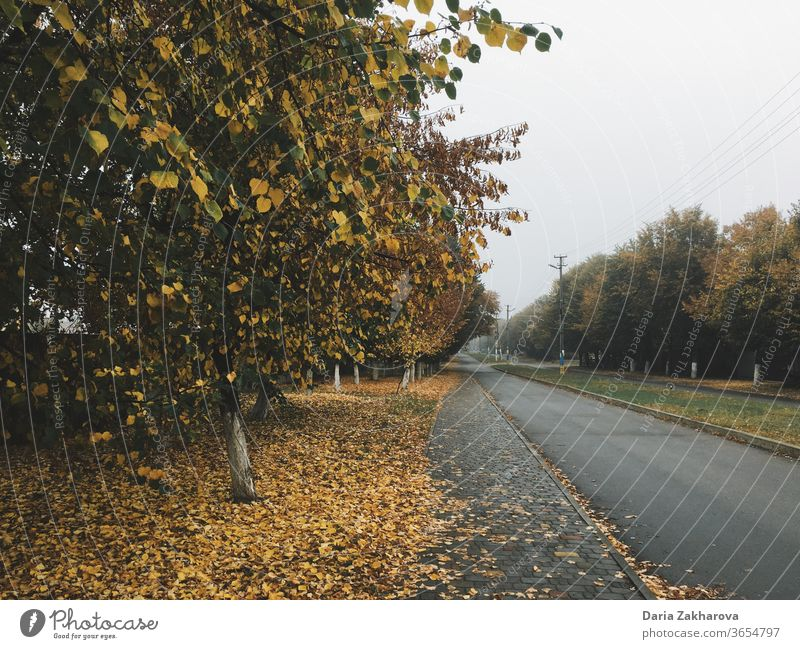 Yellow trees, autumn in the city yellow garden street landscape leaves path way empty street no people village Village road nature green