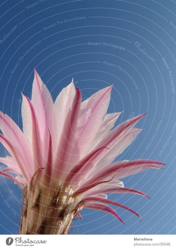 Nature Sky Flower