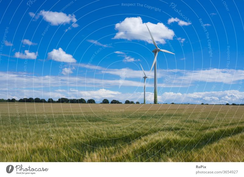 Windmills in a cornfield on a summer day. Nature Cornfield flowers Field Agriculture papaver Grain Barley rye acre bleed poppyseed Contrast Summer Weather