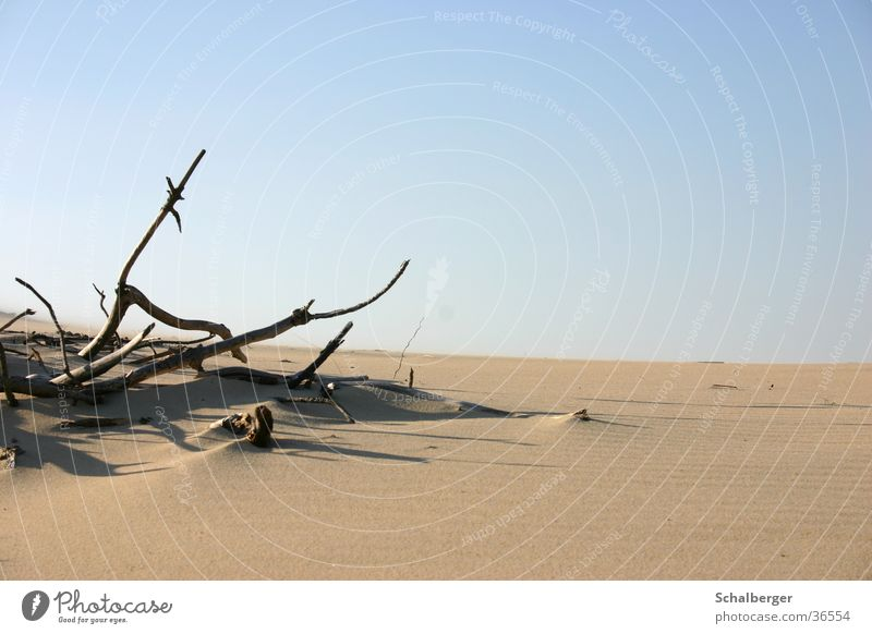 Loneliness Death Wood Warmth Sand Desert Physics