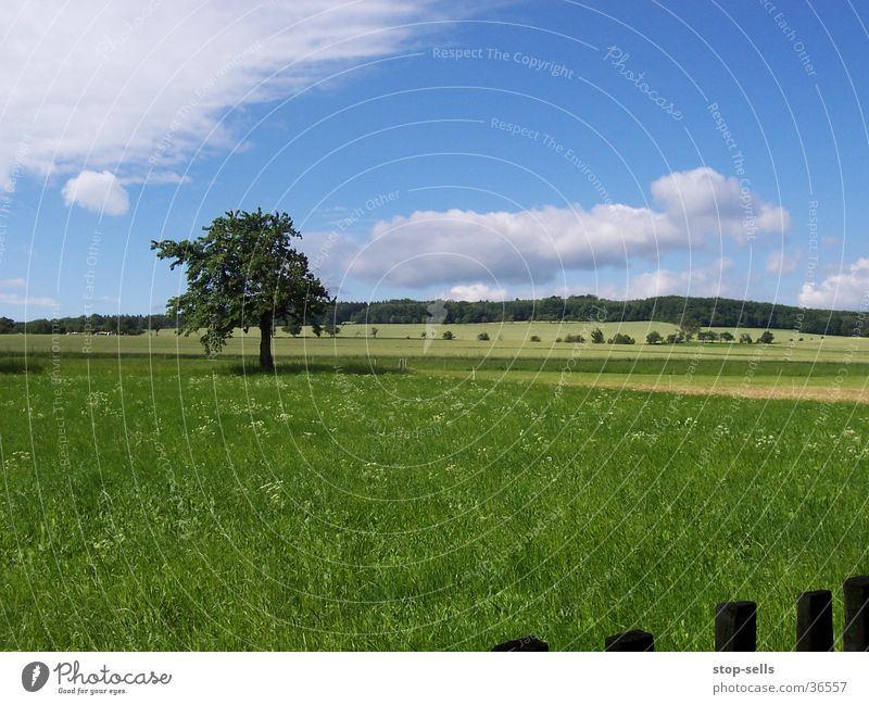 summer boredom Tree Meadow Snapshot Fence Blemish Panorama (View) Blue sky fair weather tharandt Large