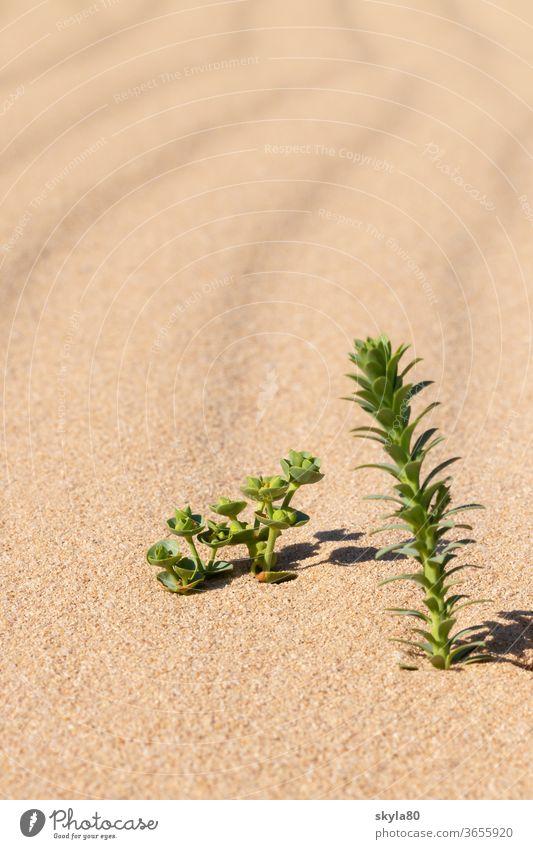 desert sun Desert Desert plant Nature Sunlight Sand Warmth Drought Environment dune Landscape Vacation & Travel Tourism Adventure Summer Hot Far-off places