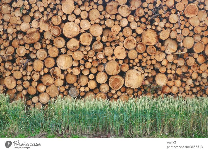 Resting mass tree trunks wood Many stacked Stack Tall Heavy disparate Deserted Colour photo Exterior shot Day Detail Nature Stack of wood Environment Rough