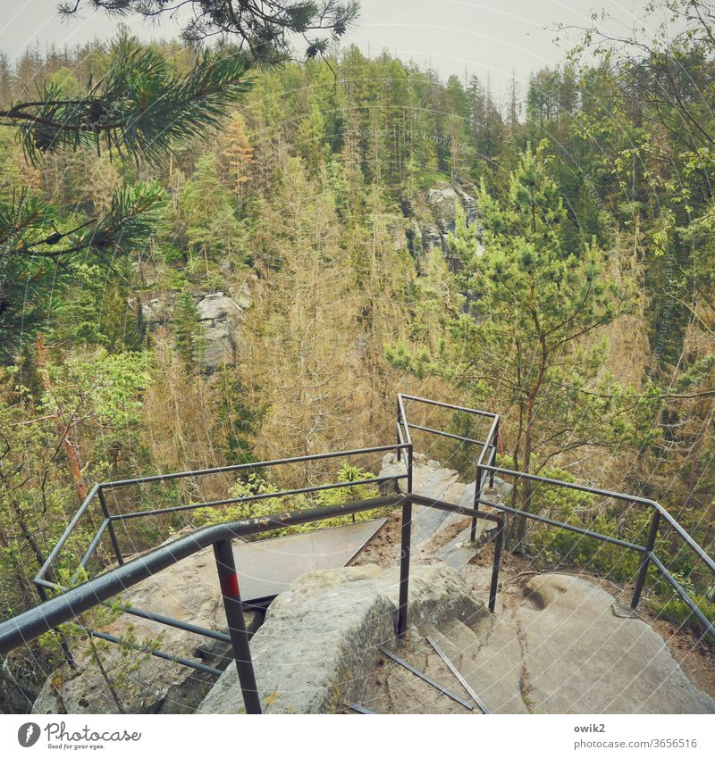 Nature stage Vantage point Handrail Protection Lookout tower Far-off places Horizon Colour photo Exterior shot Day Twigs and branches Idyll
