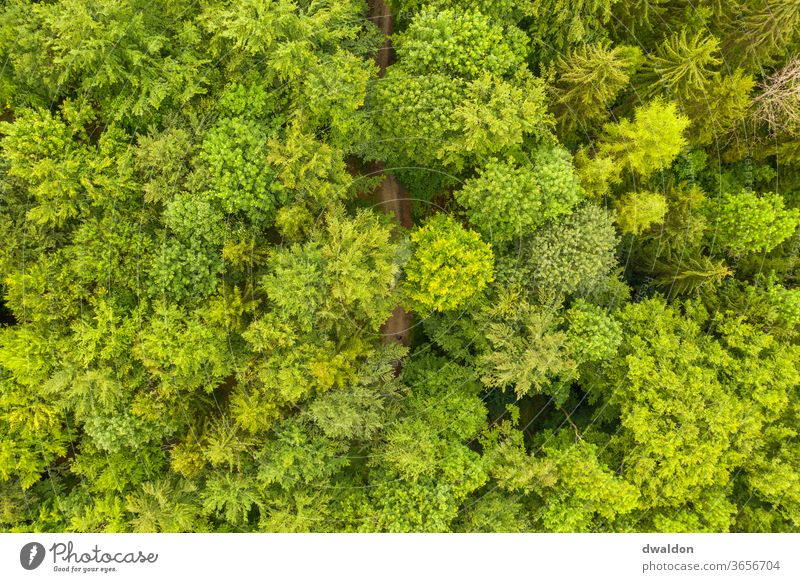 Green Waldon from above Forest drone Above aerial photograph forest path forest road Nature Colour photo Exterior shot Day Landscape green tree Environment