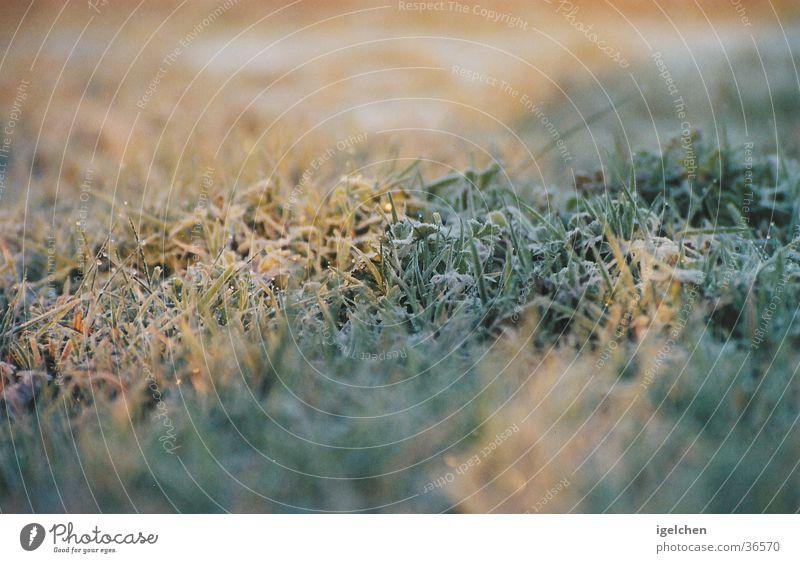 Calm Grass Simple Serene