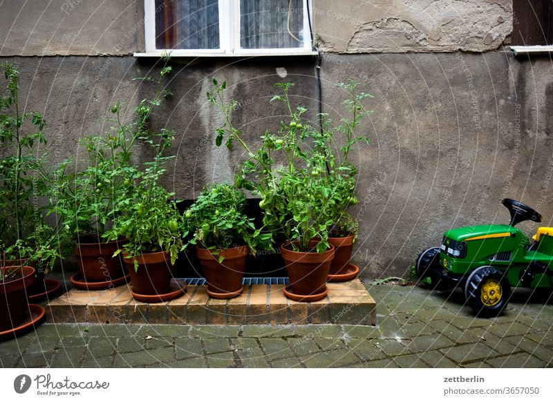 Tomato plantation with heavy technology tomato plant Old building Tractor on the outside Facade Window holidays Garden House (Residential Structure)