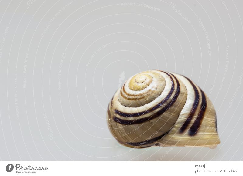 Apparently floating snail house with rally stripes on the roof Snail shell Isolated Image Spiral Protection Neutral Background Pattern Structures and shapes