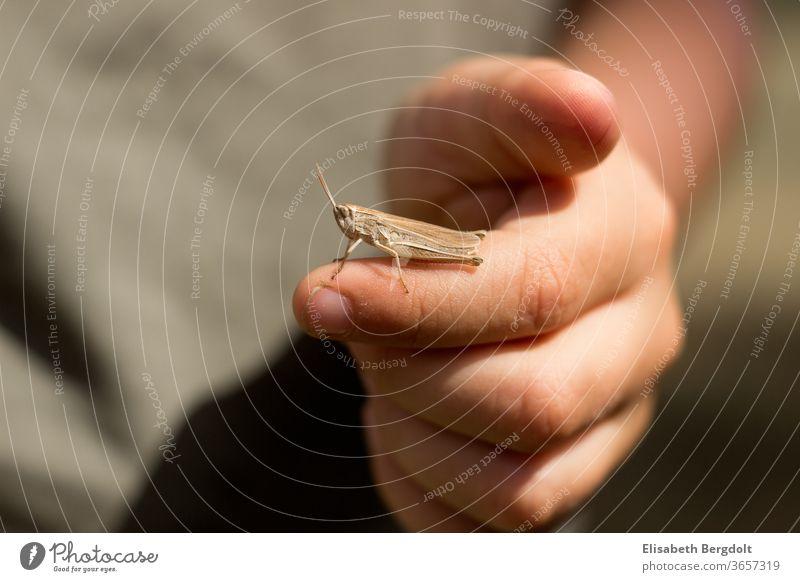 Little boy with a little grasshopper on his finger Locust Fingers by hand Child little boy Nature animals Summer