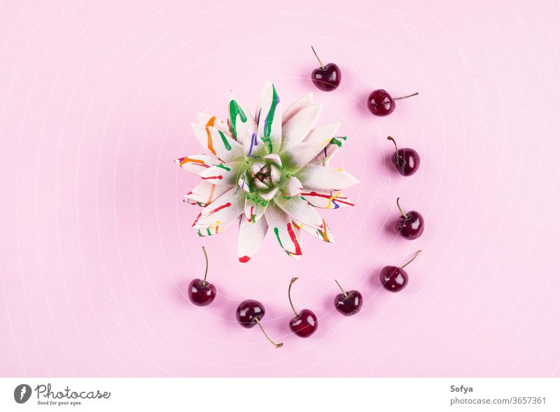 Colorful succulent plant with cherries frame colorful flat lay pink summer pastel painted background acrylic art hello clock fashion abstract flower creative