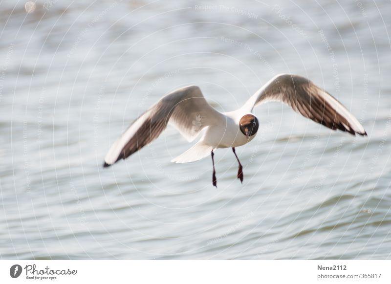 Nature Water White Ocean Joy Animal Environment Coast Freedom Air Bird Flying Wind Beautiful weather Esthetic